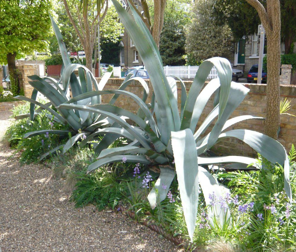 Exotic front garden