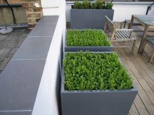 Modern Roof Garden